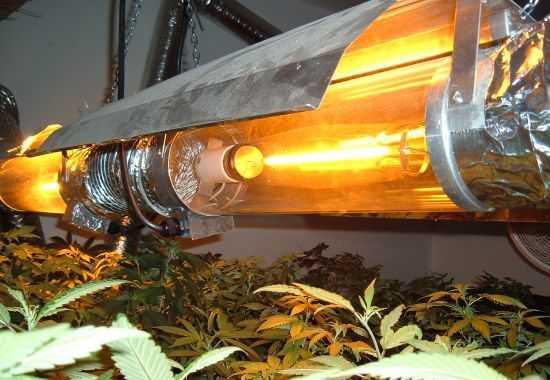 Лампа 250 днат для конопли выращивавшей марихуану в домашних условиях