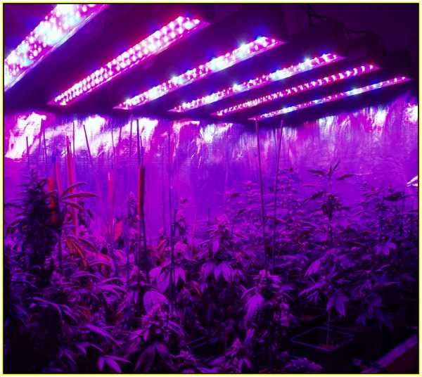 Лампы для выращивание конопли марихуана побочка
